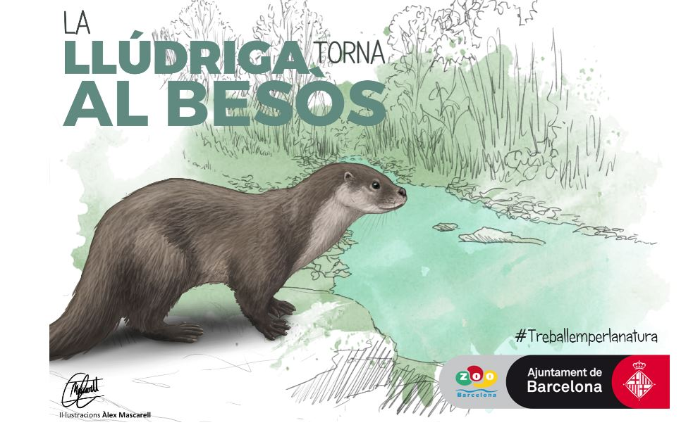 The otter Returns to the Besòs