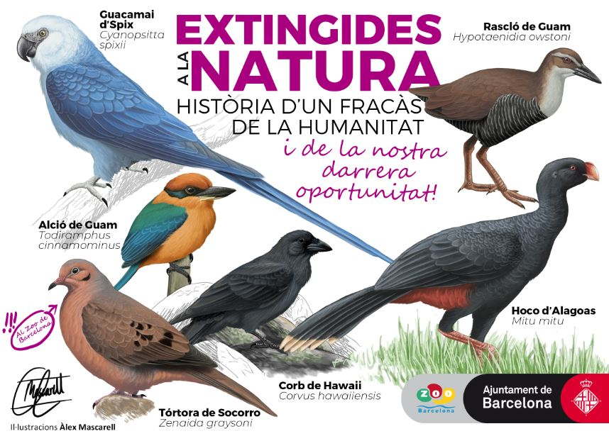 Extinct birds in nature