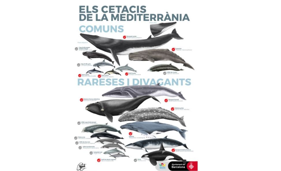 Cetaceans of the Mediterranean