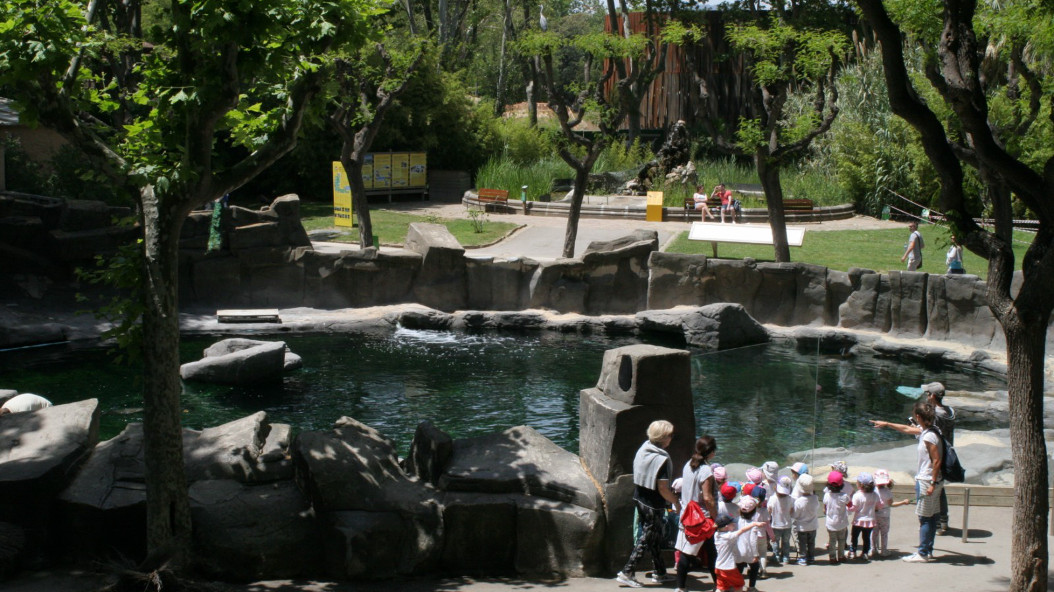 Zoo of Barcelona activities