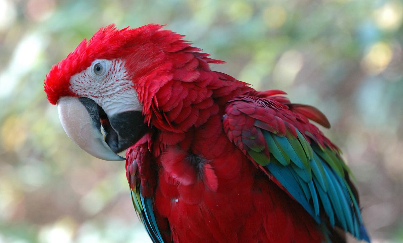 Aves Zoo de Barcelona